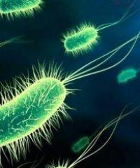 Симптомы и лечение серозного менингита