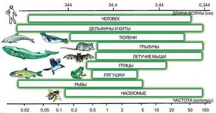Диапазоны частот, слышимых разными видами