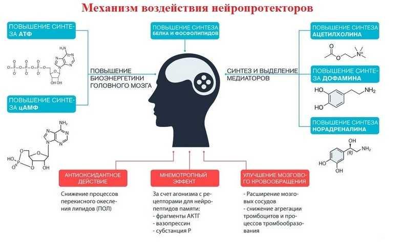Механизм воздействия нейропротекторов