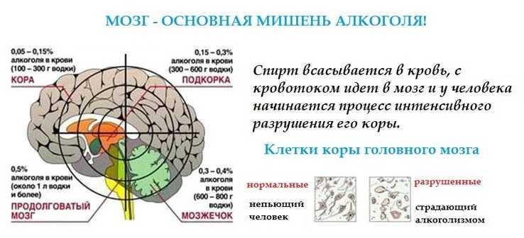 Воздействие алкоголя на мозг и его клетки