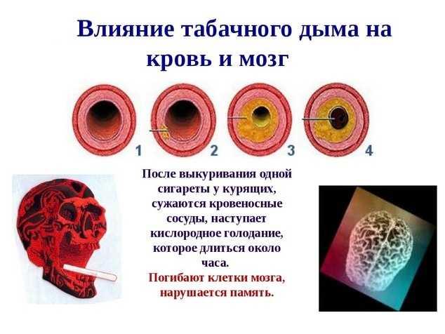 Влияние табачного дыма на мозг и кровь