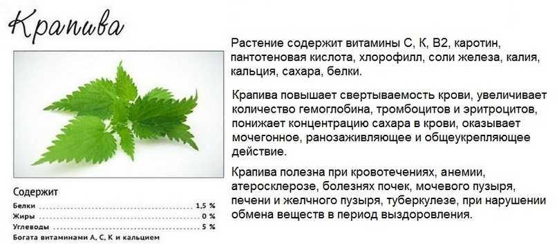 Полезные свойства крапивы