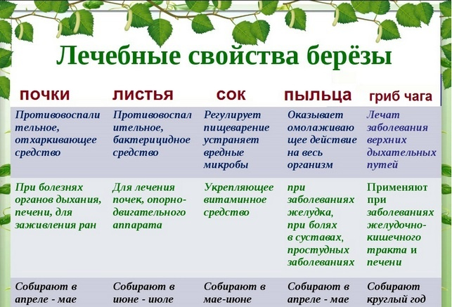 Лечебные свойства березы
