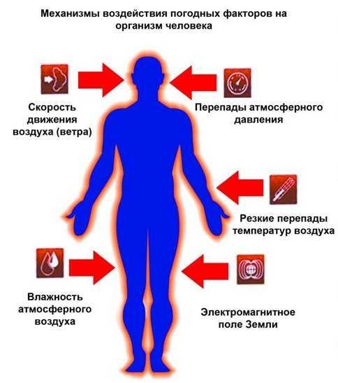 Механизм воздействия погодных факторов на организм человека