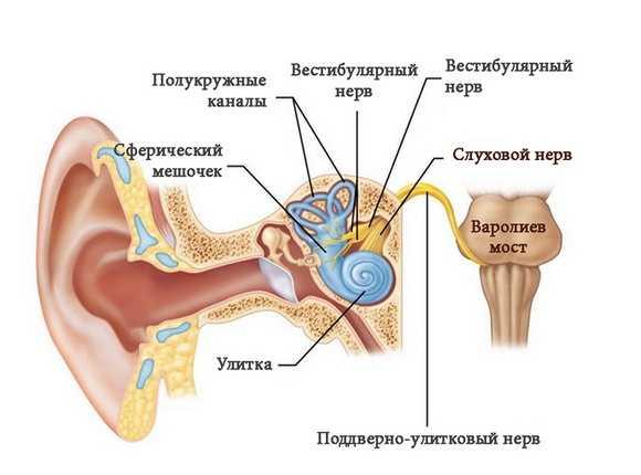 Вестибулярный нерв