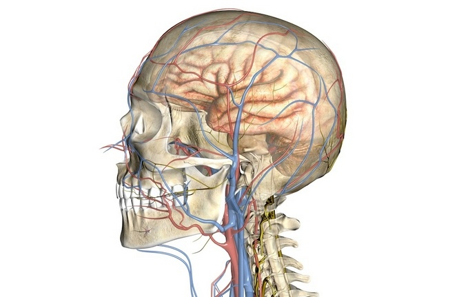 церебральная ангиодистония сосудов