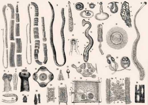 Паразиты в головном мозге виды и формы